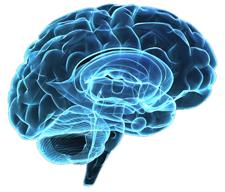 Profile of a brain
