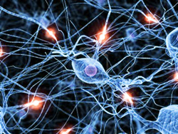 Brain Synapses